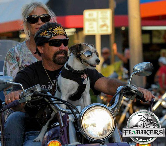 Everything You Need to Know About Riding with Your Dog